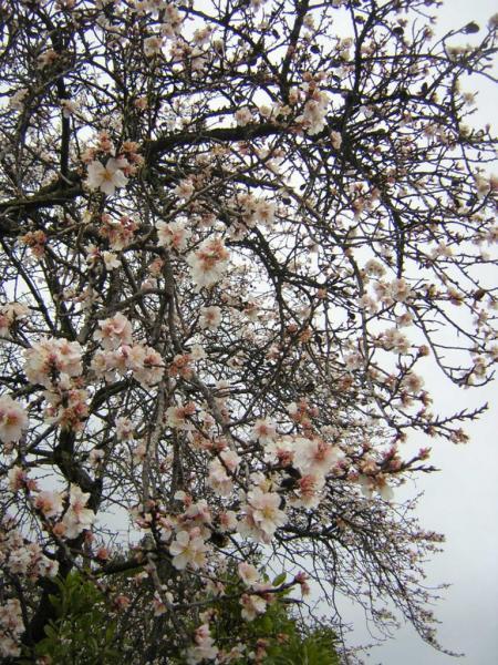 arbres-en-fleurs-001.jpg