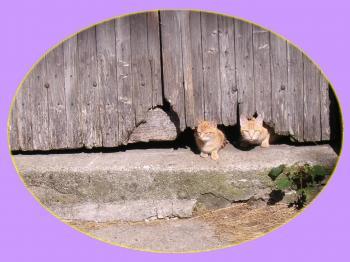 chatons-roux-en-medaillon.jpg