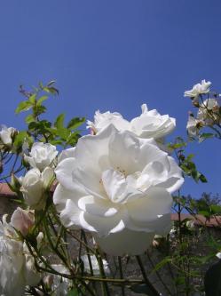 fleurettes-009.jpg