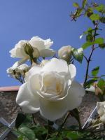 fleurettes-012.jpg
