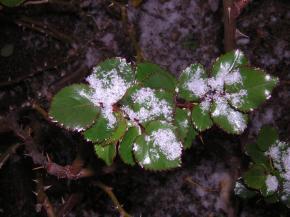 jardin-sous-la-neige-007.jpg