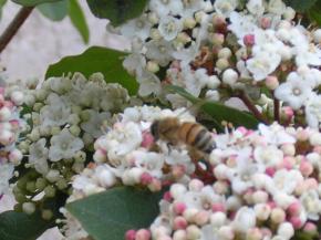 l-abeille-015.jpg