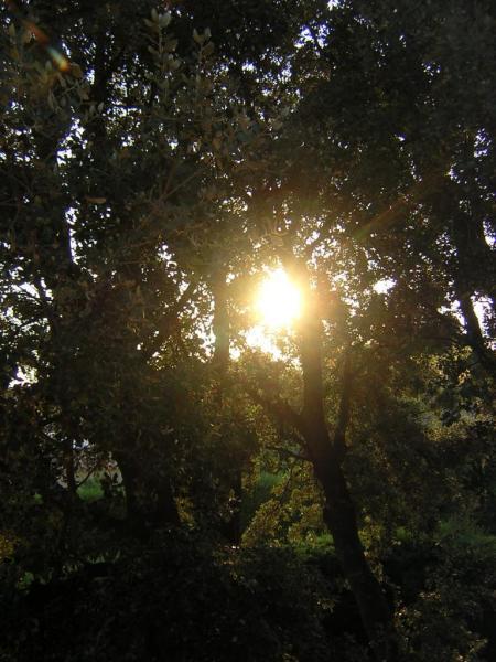 lever-du-soleil-022.jpg