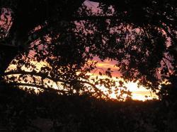soleil-levant.jpg